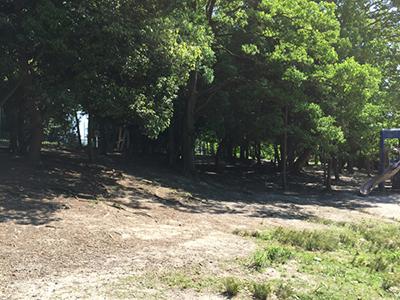 木陰でバーベキューできそうな場所